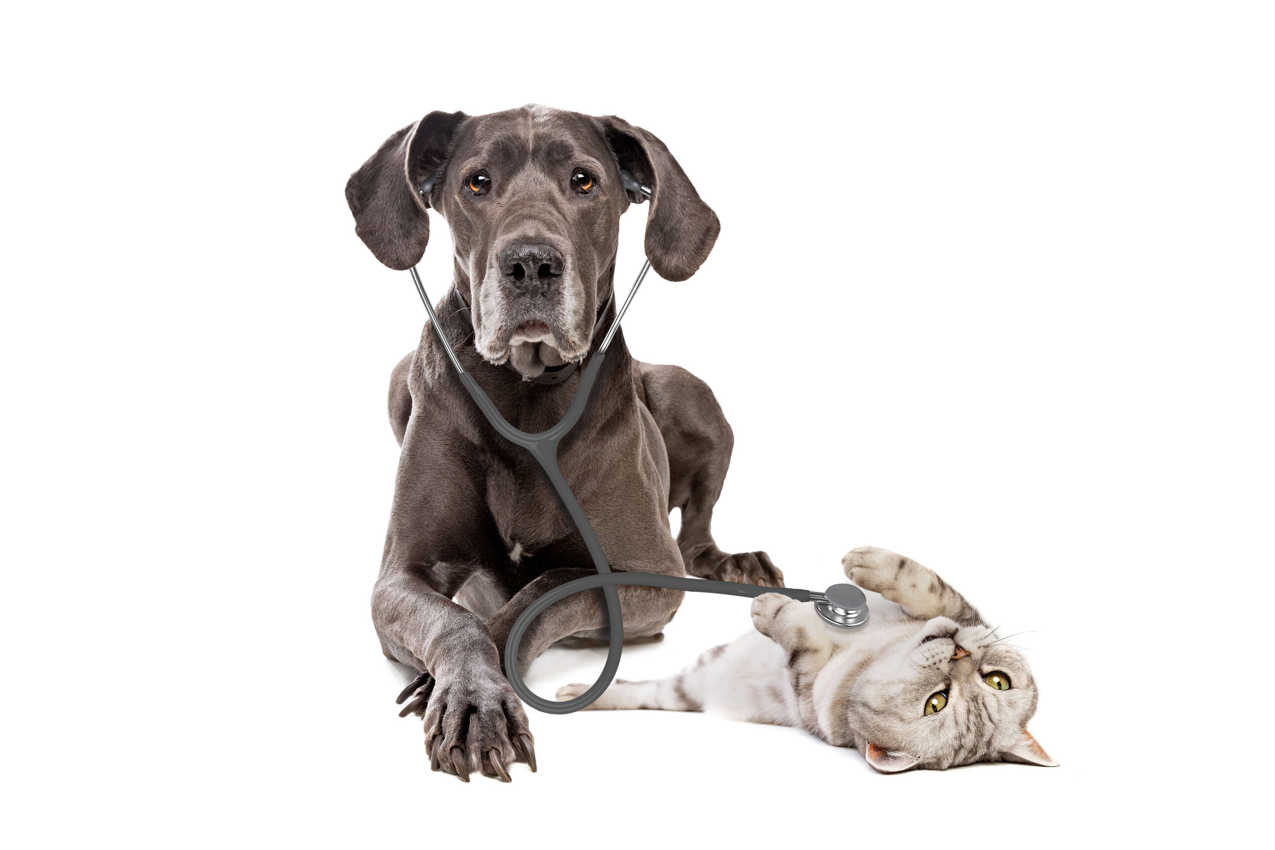 controlli-periodici-veterinario-domicilio-firenze
